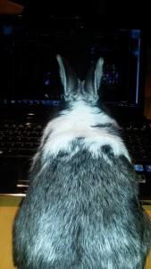 Wenn ein reales Haustier dem WoW-Haustierkampf beitreten möchte ... (Copyright: DeepGround Magazine)